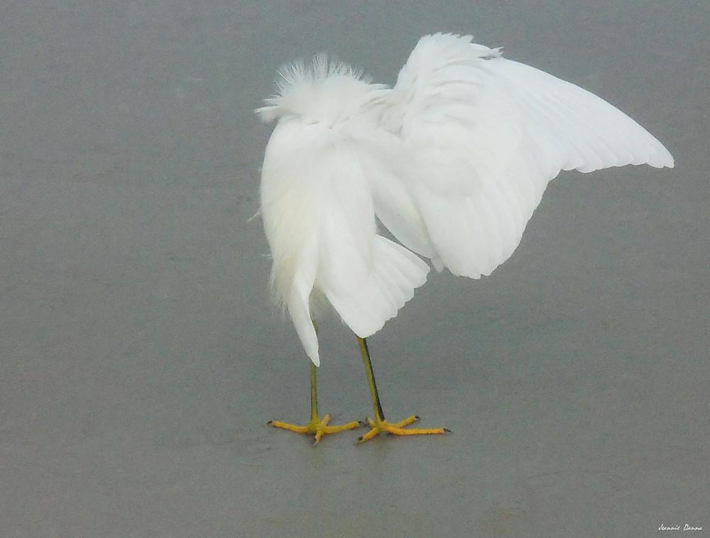 Egret ~ stretch.jpg