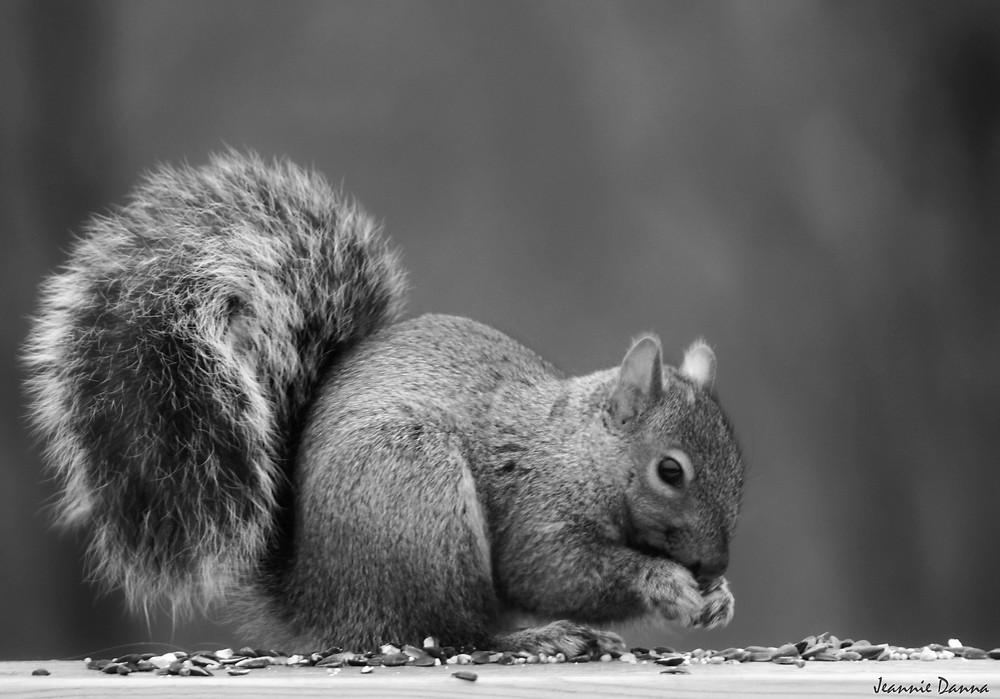 monochrome squirrel.jpg