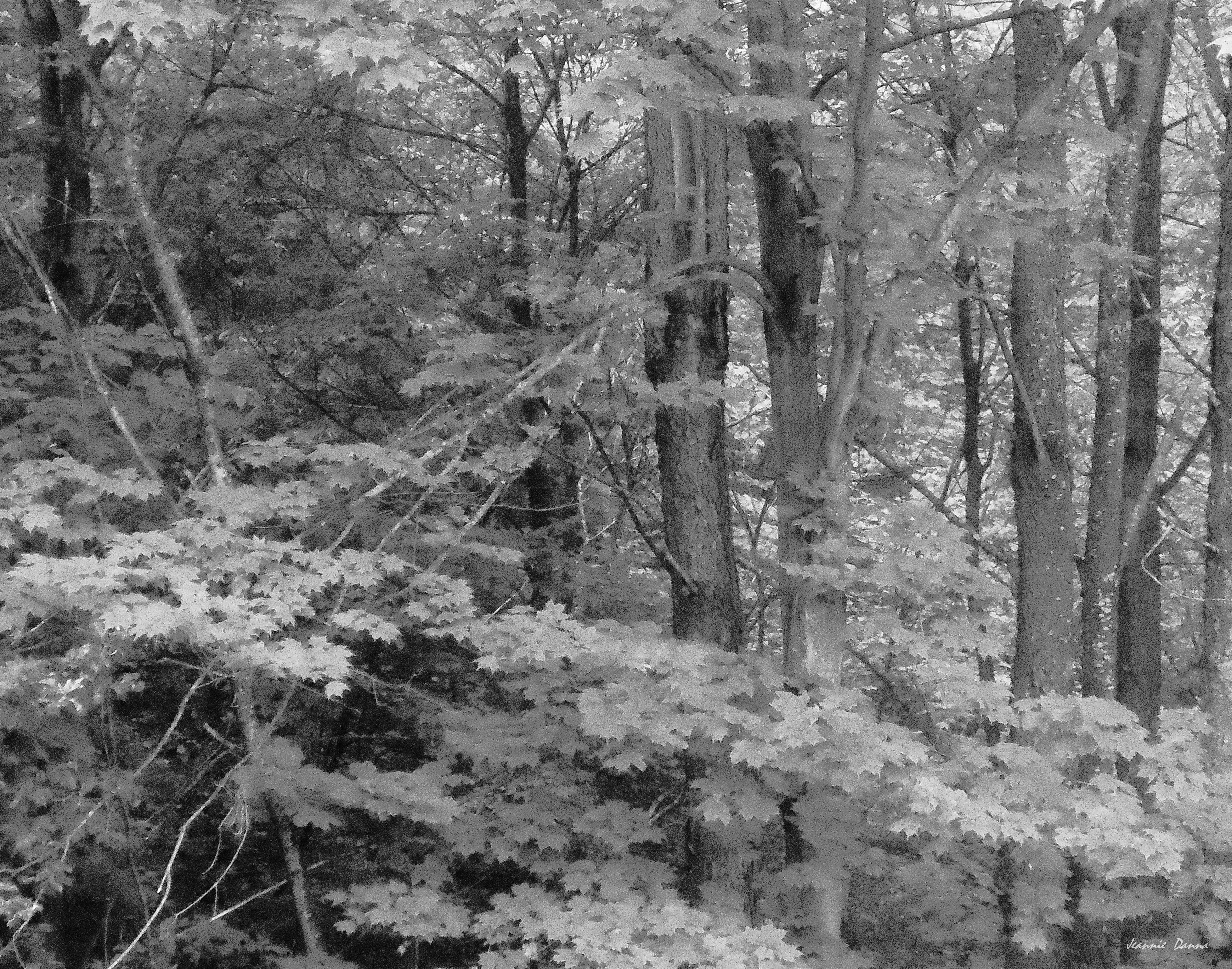 monochrome woods