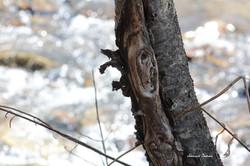 Saw Mill Run Creek ~ Cattaraugus County, NY d.jpg