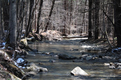 Saw Mill Run Creek ~ Cattaraugus County, NY.jpg