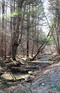 Saw Mill Run Creek ~ Cattaraugus County, NY c.jpg