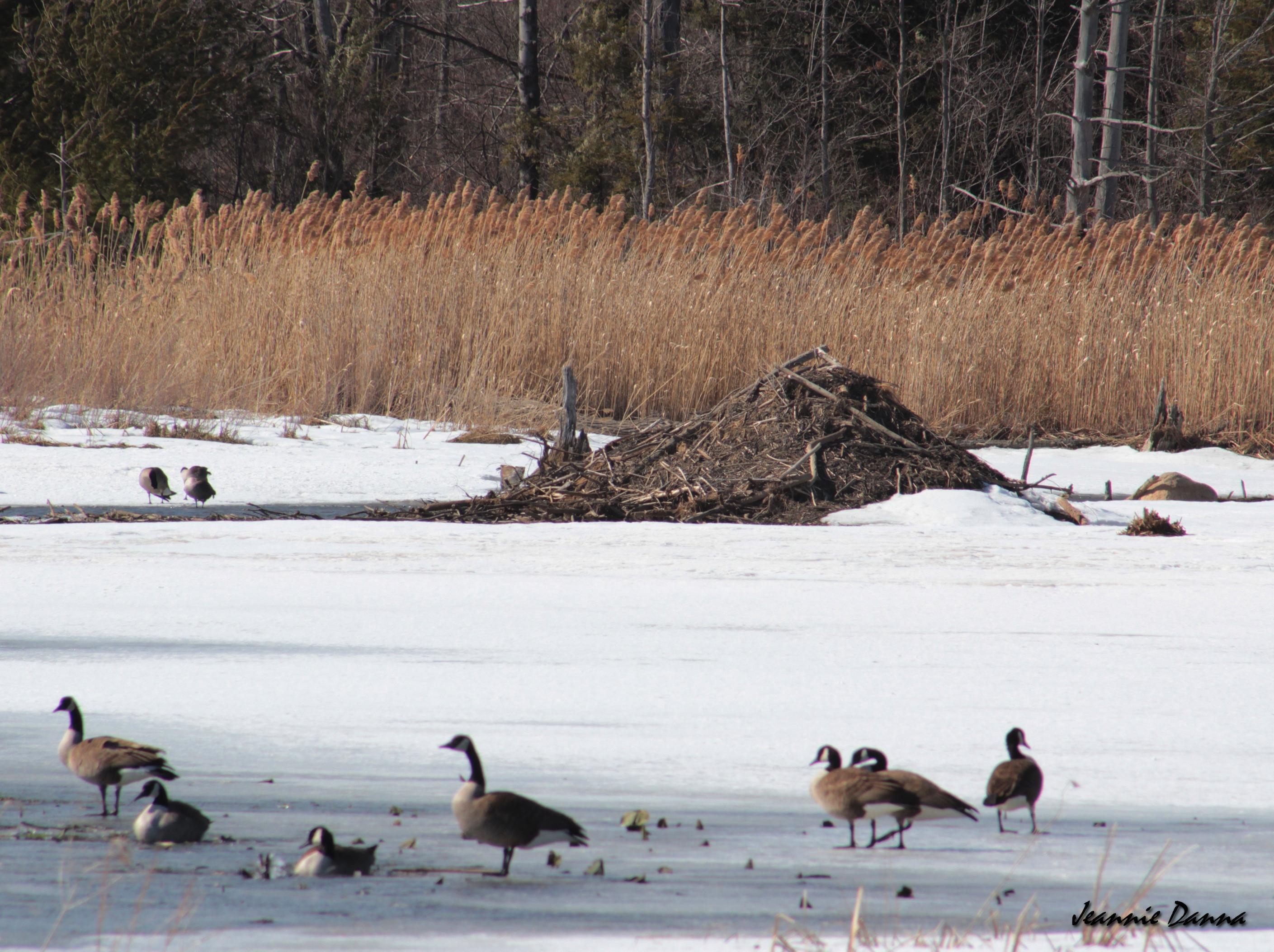 Open Meadows Marsh, Chautauqua County NY.jpg