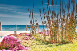 Canne-Bianche_colours