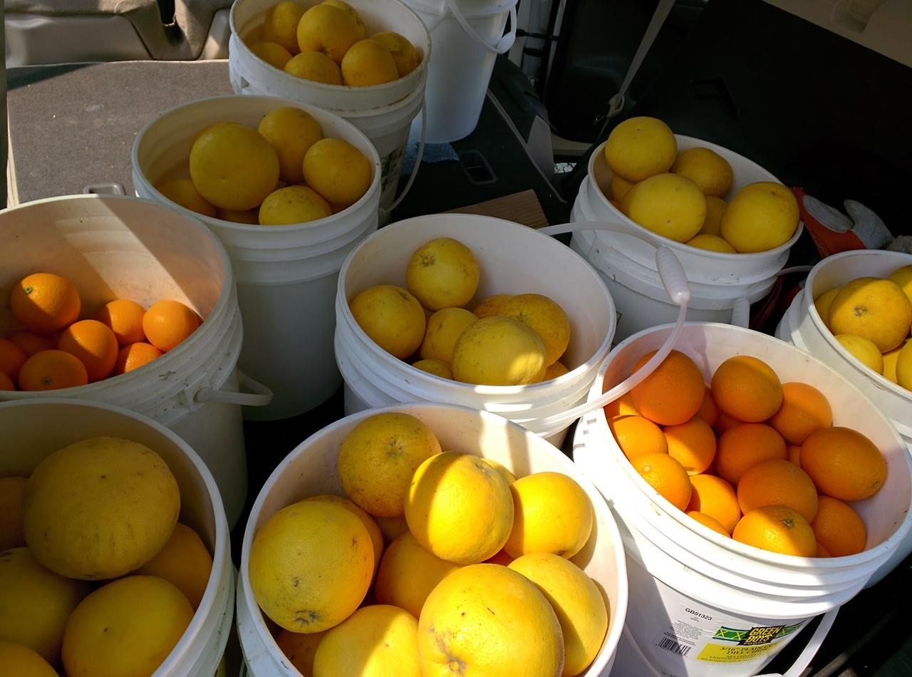 Buckets of fruit