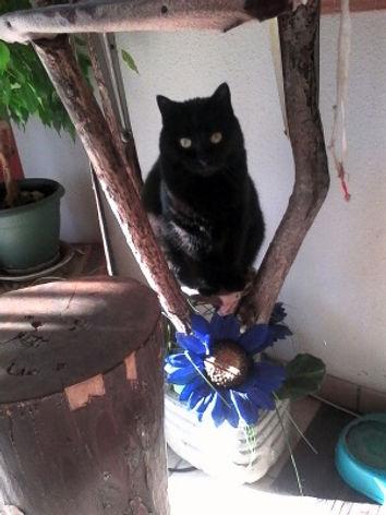 Gardiennage chat