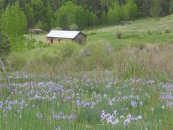 Mora Valley