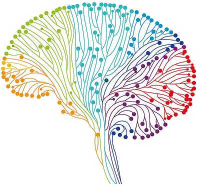 brain coloured copy.png
