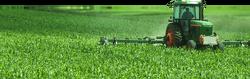 Harvesting Marijuana Field