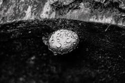 Wet Magic Mushroom