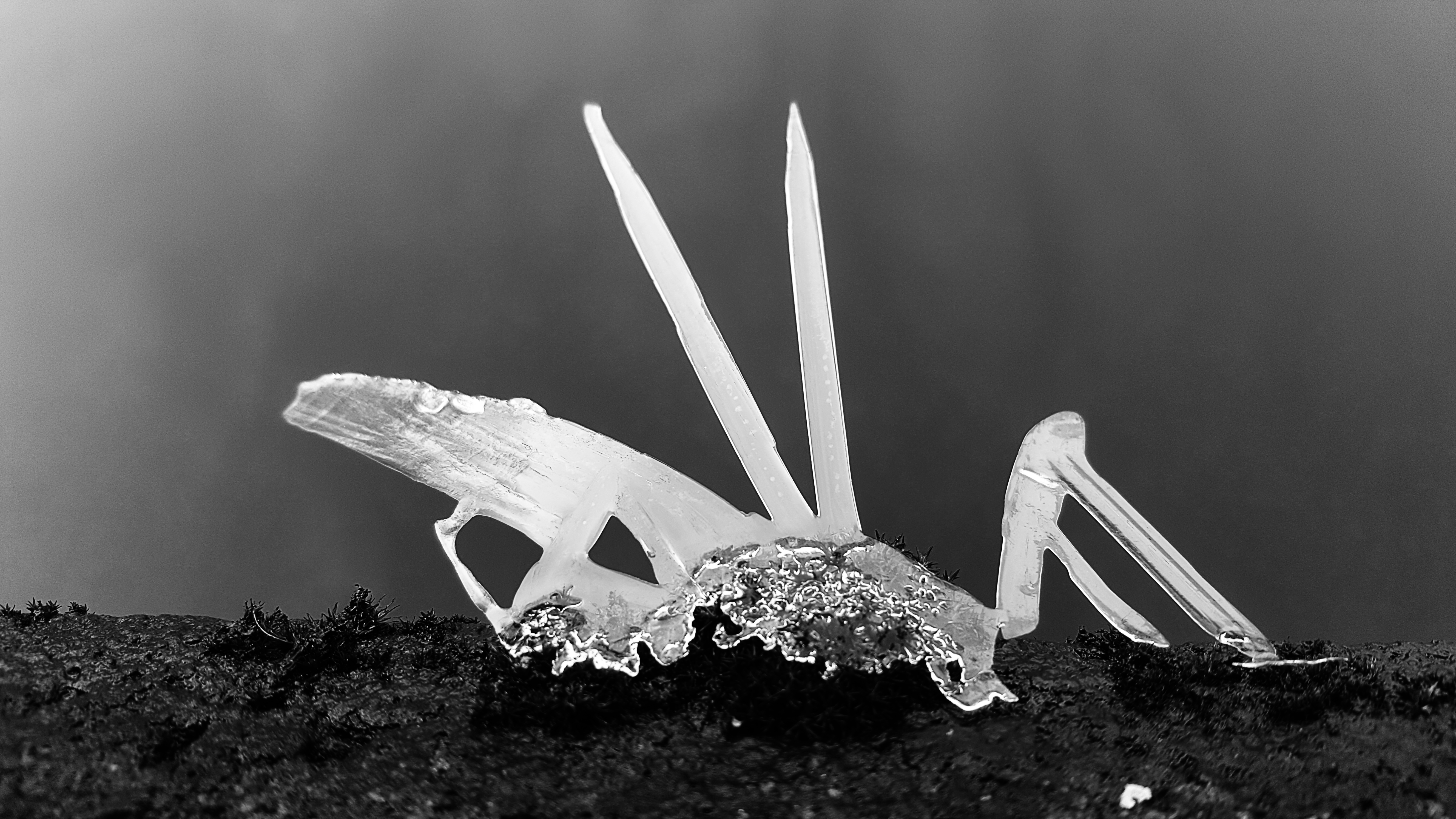 Ice Insect