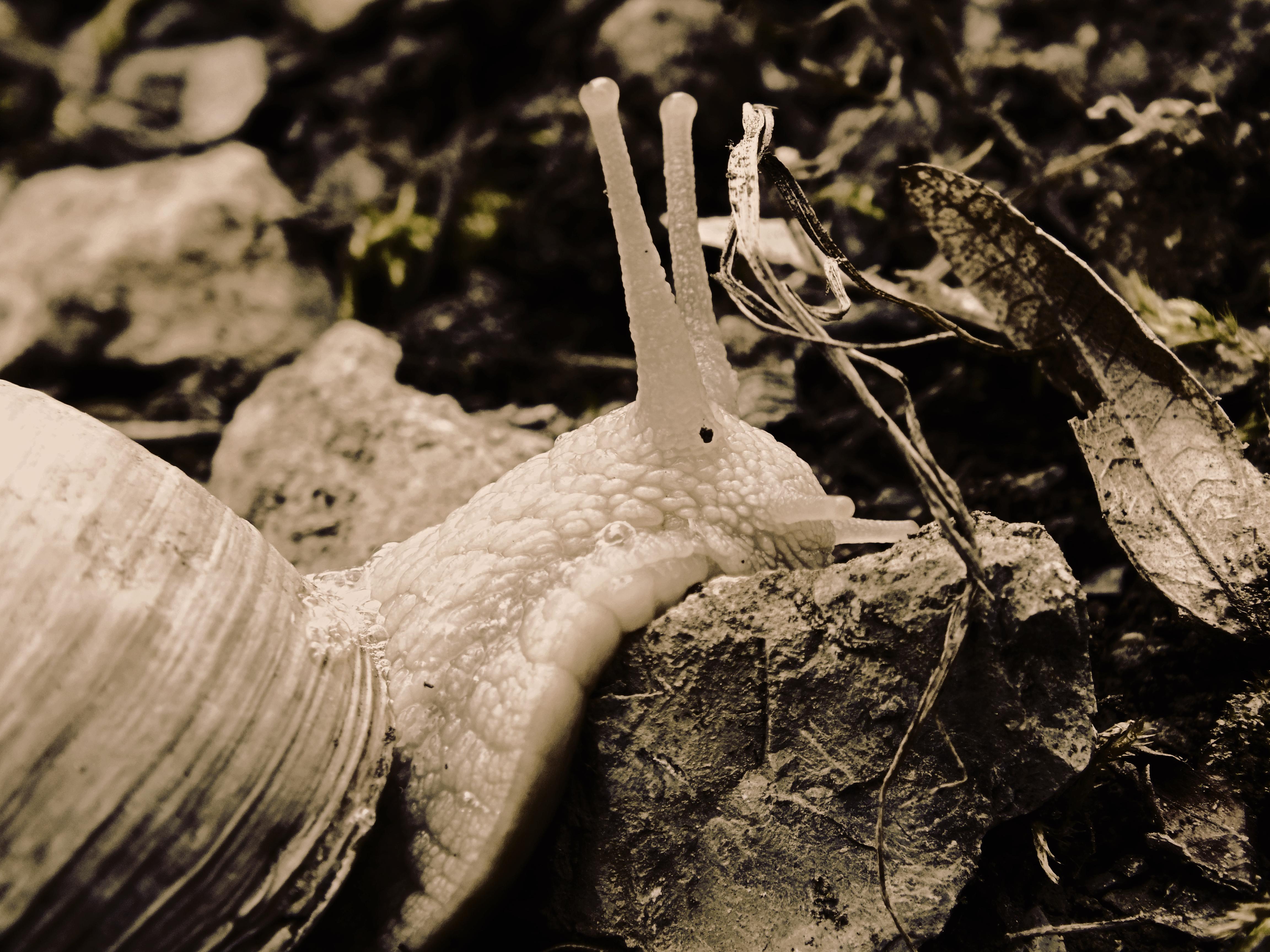Slug n' Stone