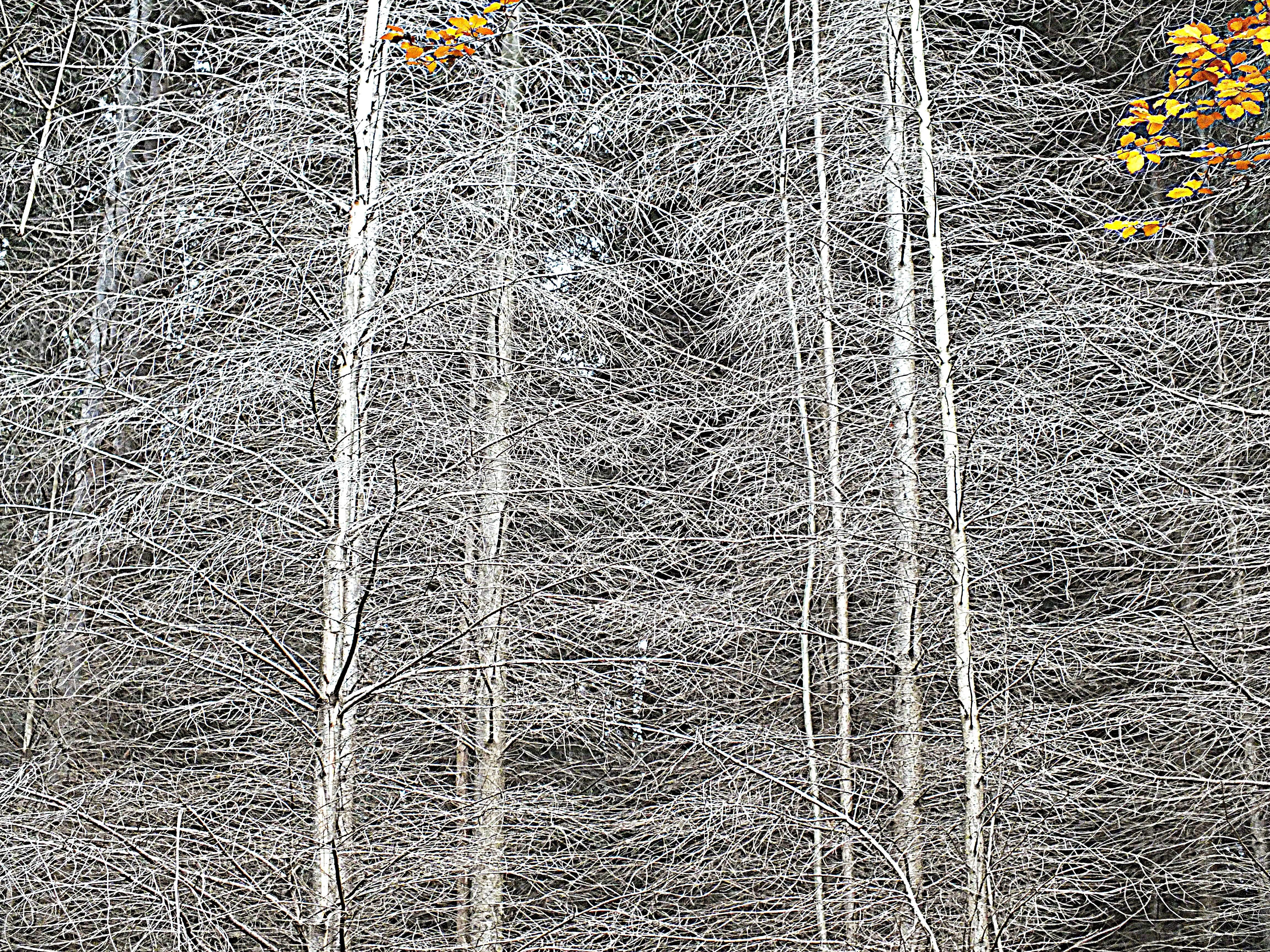 Bäume am Silbersee