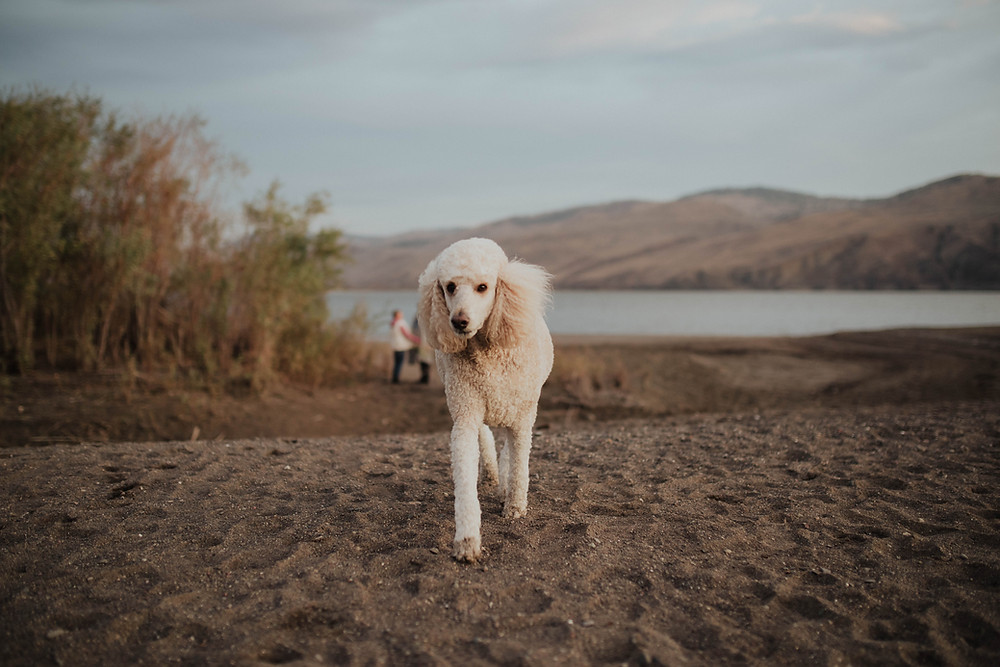 Salmon Arm photographer couple on the beach with their dog at tranquil farm