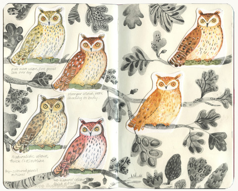 Owl experiments