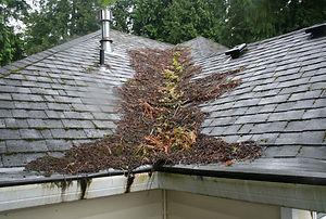Roof Maintenance Edmonton