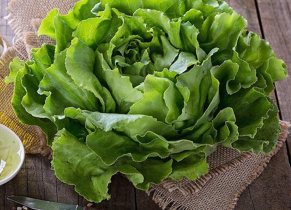Butter Lettuce Hydroponic (1 head)