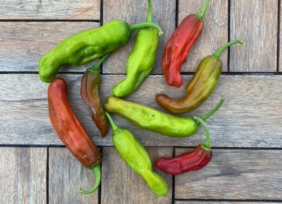 Shishito Peppers (half pound)