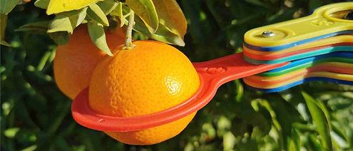anillas calibradas fruta.jpg