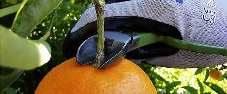 Tijera corta cítricos (Naranjas, Mandarinas, Limones)
