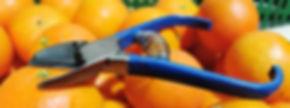 tijera para la recolección de fruta.jpg