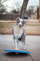 Wobble Boards Dog Agility