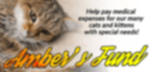 AMBERS-FUND_new_web_banner.jpg