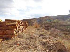 森林伐採.jpg