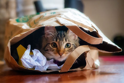 Cat behavior, adding a new cat to your home
