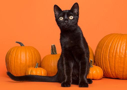 Halloween Safety Tips  |  The Kurious Kat