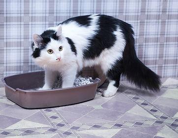 cat-litterbox.jpg