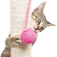 What is cat enrichment