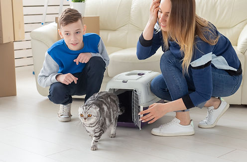 bringing home a new cat