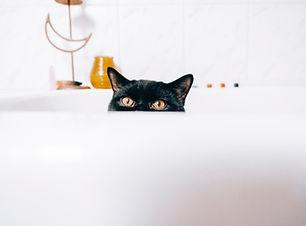 pexel-cat.jpg