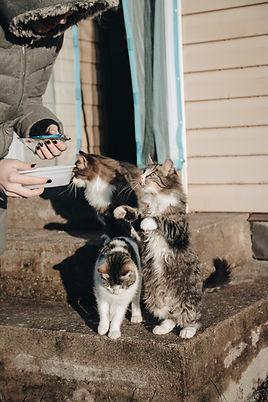 Cat Nutrition     The Kurious Kat