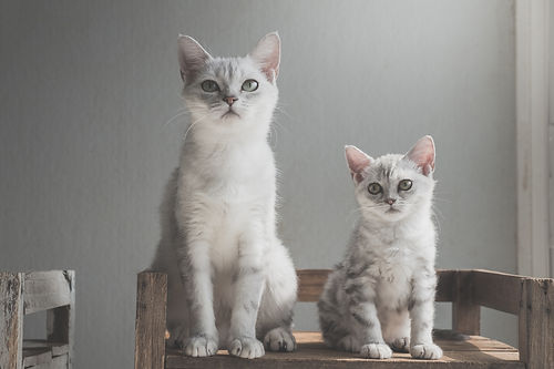 young and older cat compatibility