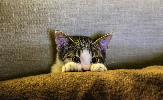 Cat Behavior  |  The Kurious Kat
