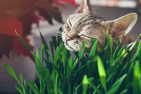 raw food for your cat and how to feed raw cat food
