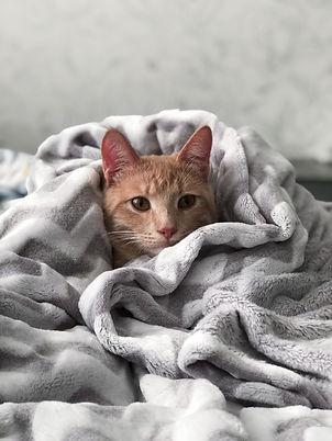 Cat Health     The Kurious Kat