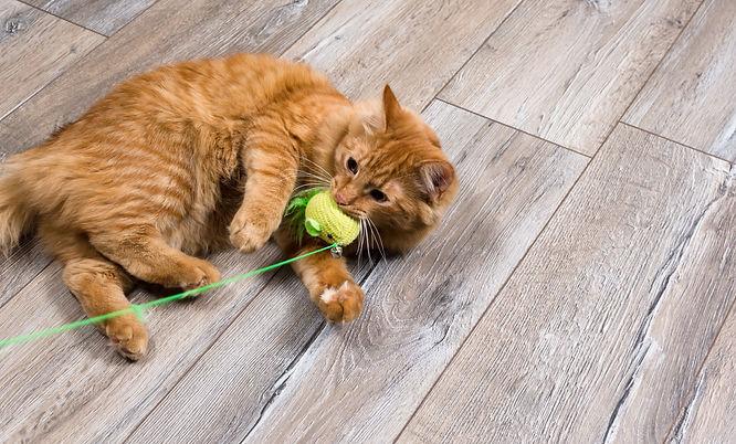 Cat Accessories  |  The Kurious Kat