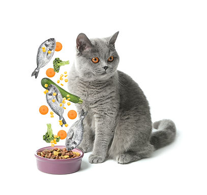cat nutrition and variety for your cat