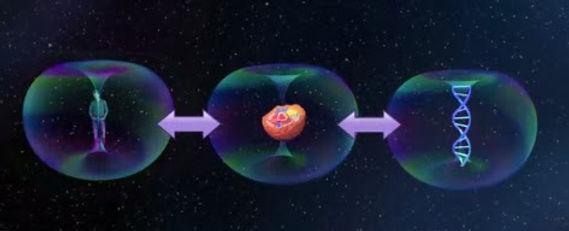 interaction champ unifie ADN.jpg