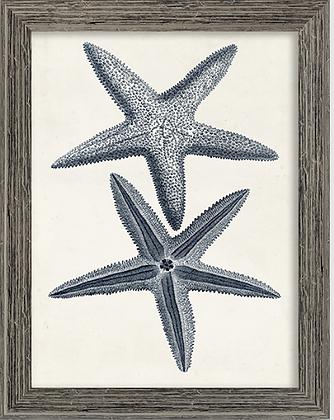 Seastar Print