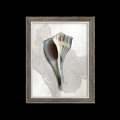 Seashell 3 Print