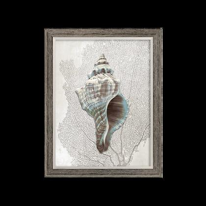 Seashell 1 Print