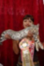 питомник бенгальских кошек ,бенгальские