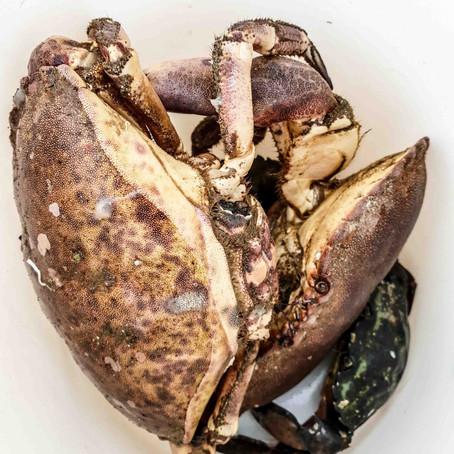 The crab Island Hitra - Knarren Brygge