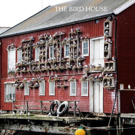 The bird house - Halten/Husøy