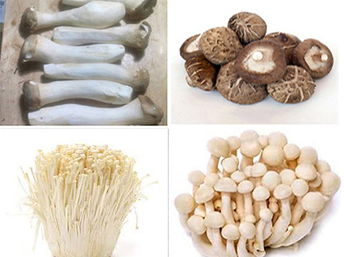 Fresh Mushrooms Box