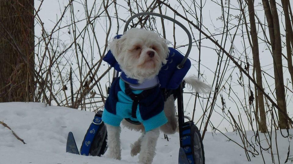 Noah on wheelchair skis
